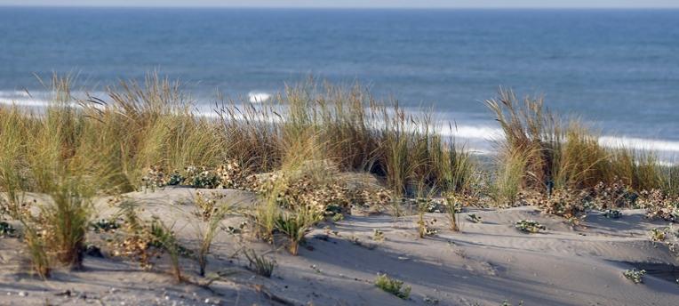 Natur am FKK-Strand